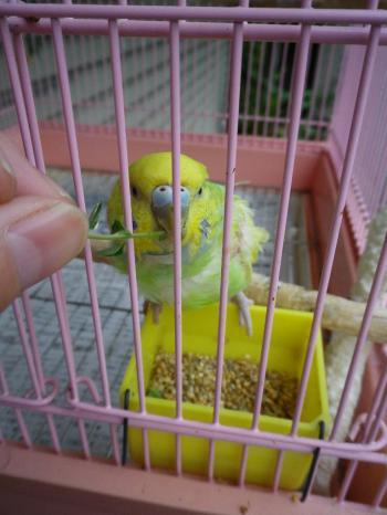 natu1_20110821081257.jpg