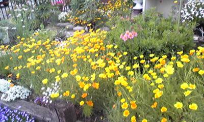 小澤さんの庭