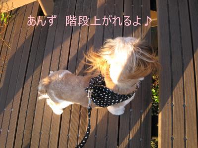 2010_0616_181757-IMG_9841_convert_20100617212248.jpg