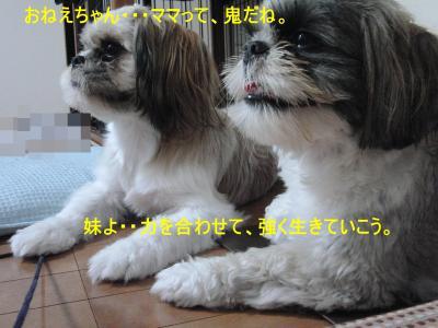 2010_0913_200223-CIMG3901_convert_20100913222449.jpg