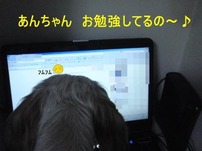 2010_0913_224721-CIMG3924_convert_20100916215007.jpg