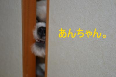 2010_1215_180946-DSC_0474_convert_20101216205841.jpg
