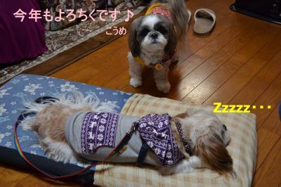 2011_0101_192021-DSC_0735_convert_20110102013953.jpg