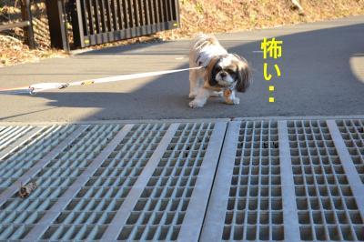 2011_0104_153145-DSC_0949_convert_20110105221601.jpg
