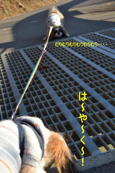 2011_0104_153227-DSC_0952_convert_20110105225849.jpg