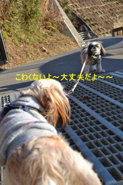 2011_0104_153235-DSC_0953_convert_20110105230401.jpg