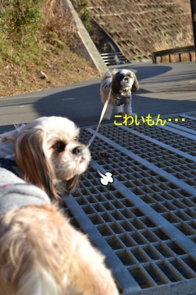 2011_0104_153237-DSC_0954_convert_20110105230244.jpg
