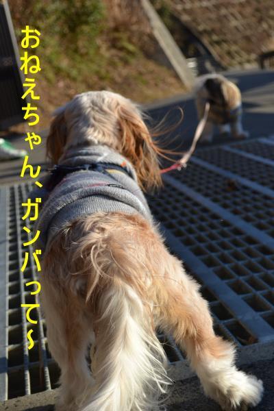 2011_0104_153249-DSC_0956_convert_20110105230512.jpg