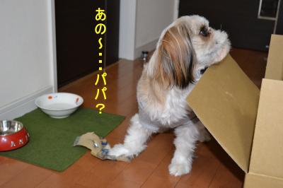 2011_0120_183619-DSC_0265_convert_20110121225441.jpg