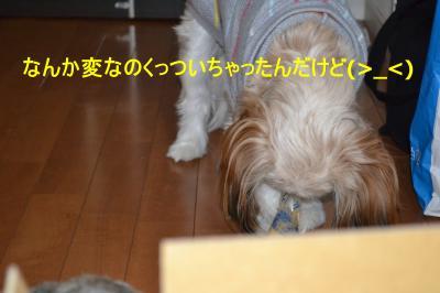 2011_0120_183644-DSC_0270_convert_20110121225804.jpg