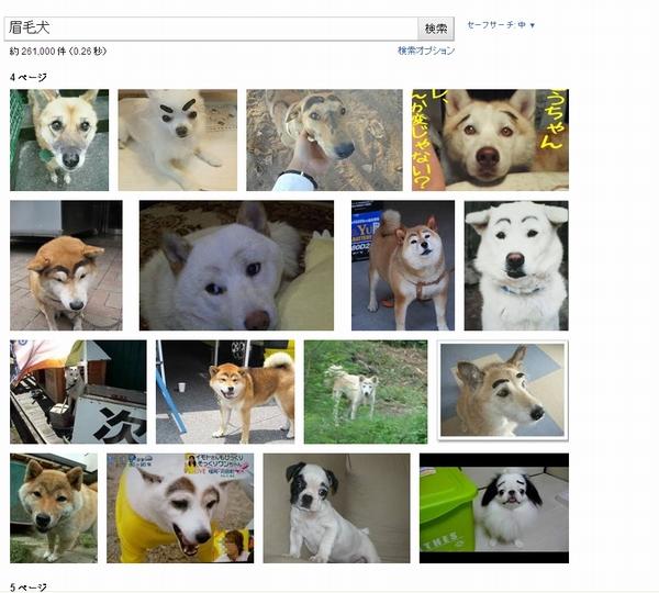 眉毛犬で検索