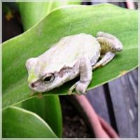 frogfrog543