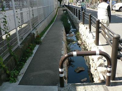 緑化沿道20センチ堺市芦ヶ池