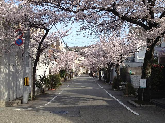 桜道130401桜