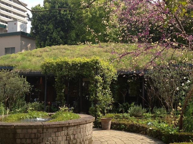 IMG_4333●屋上緑化の小屋です