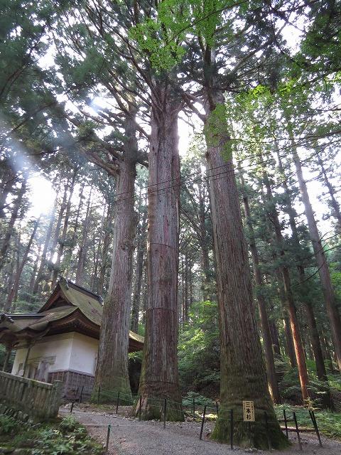 IMG_1039●光前寺の3本杉です