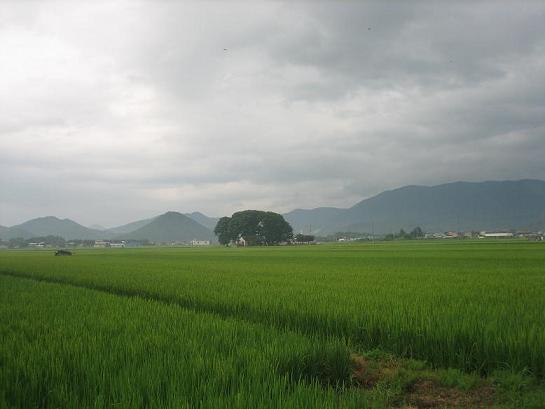 田の中の社