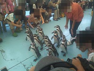 鳥パレード ペンギン