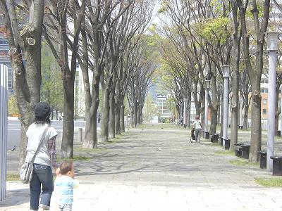 美術館の並木道(ぐらんもーる公園)