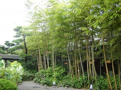 雨の竹林*