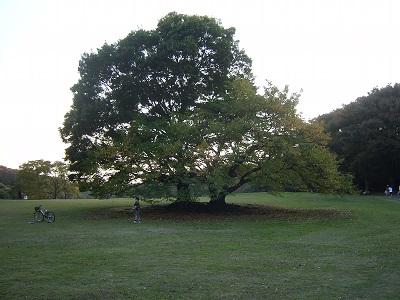 いつもの木*