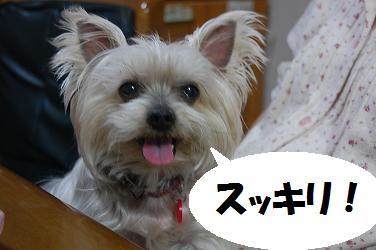 dog200.jpg