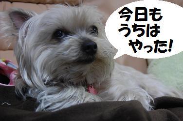 dog202.jpg