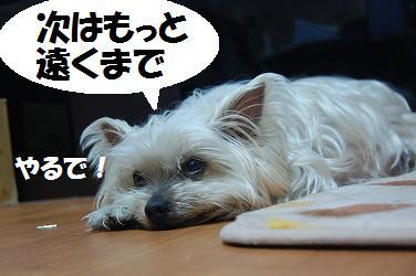 dog203.jpg