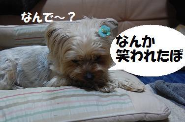 dog204.jpg