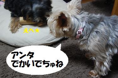 dog207.jpg