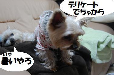 dog209.jpg