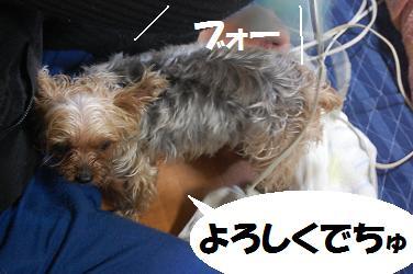 dog211.jpg