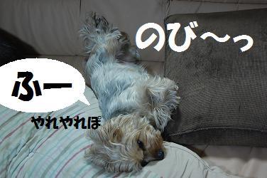 dog212.jpg