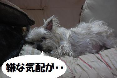 dog215.jpg