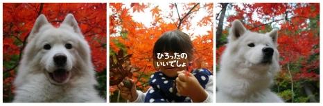 20141121_11.jpg