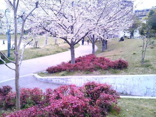 たそがれの桜
