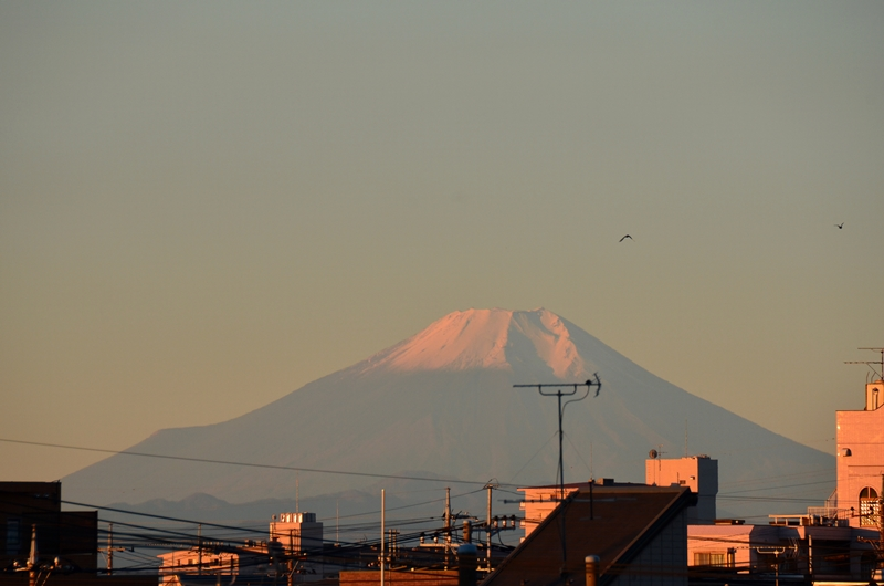 20141114 fuji