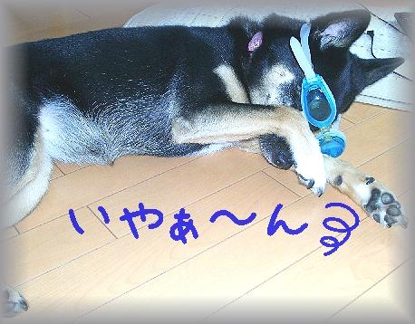 PIC_0070_20120725113633.jpg
