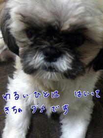 番犬活動3