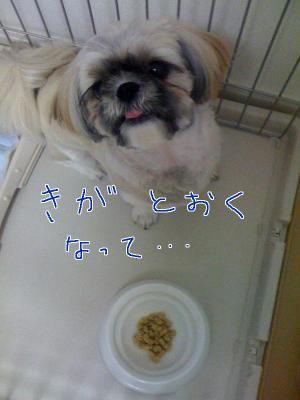 ちょびベロ11
