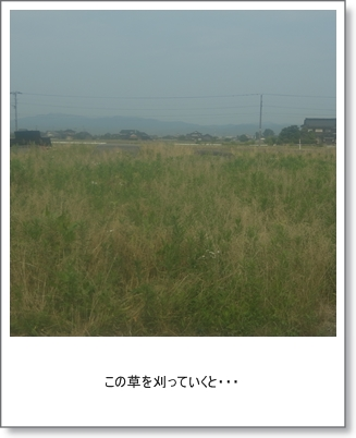 20130611a.jpg