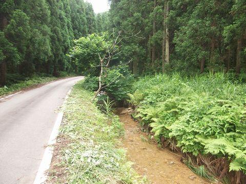 hunagawa0623-6.jpg