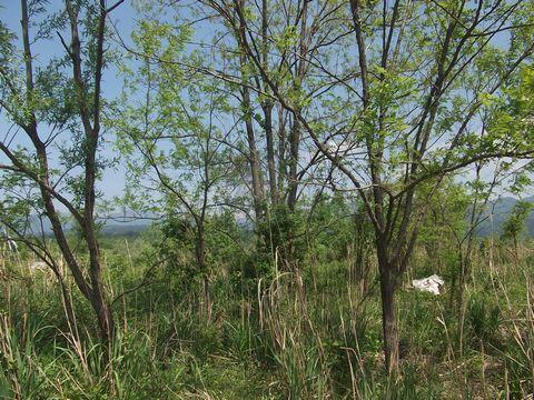 kurobegawa0518-5.jpg