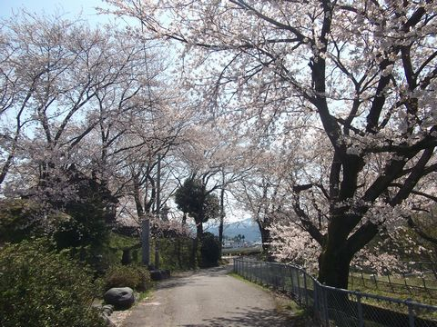 wakaguri0413-3.jpg