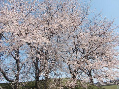 wakaguri0413-4.jpg