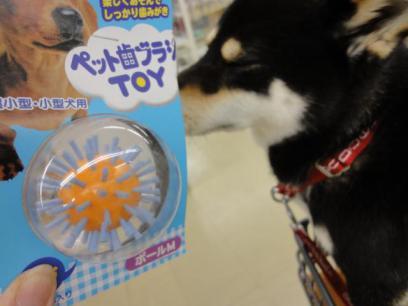 ペット歯ブラシ