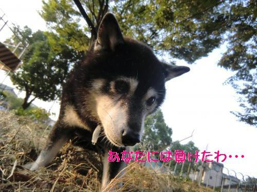 2010_0919_062236-CIMG1085_convert_20100919192518[1]