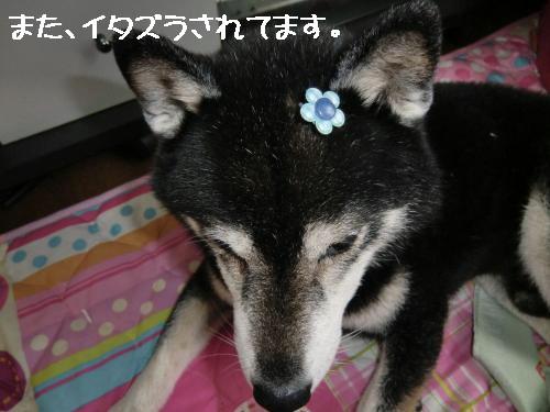 2010_0919_132055-CIMG1113_convert_20100919193912[1]