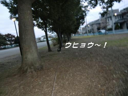 2010_1107_061100-CIMG1957_convert_20101108154206[1]
