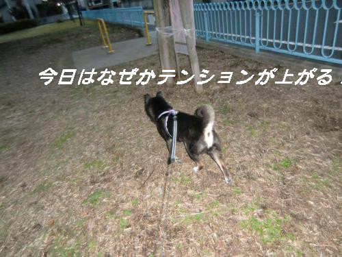 2010_1107_061133-CIMG1958_convert_20101108154107[1]